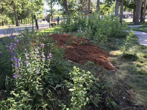 Foraging garden July 2018, after Peggy and a group of members volunteered time and labor to weed and mulch these native plantings.